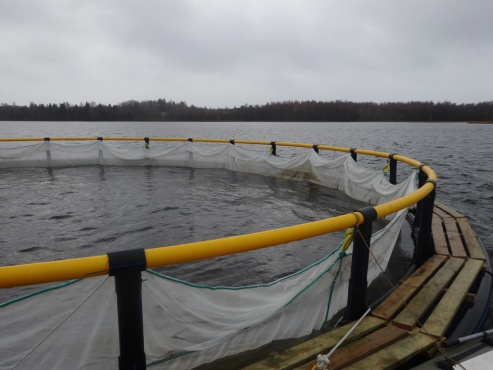 "LLC ""Aquaculture"" Vologda region"